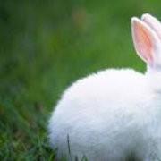 买鲁兔找屠氏生态科技,屠氏生态科技供应优质的鲁兔