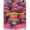 3M5907/3M5907泡棉胶